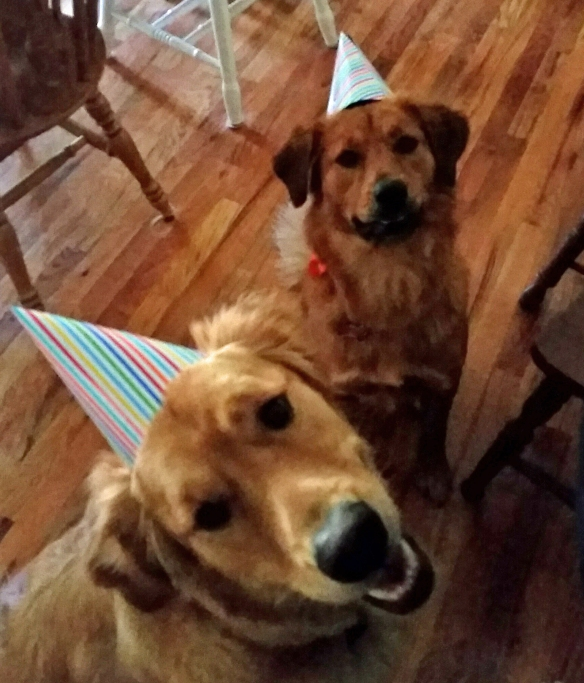 Dogs in Party Hats